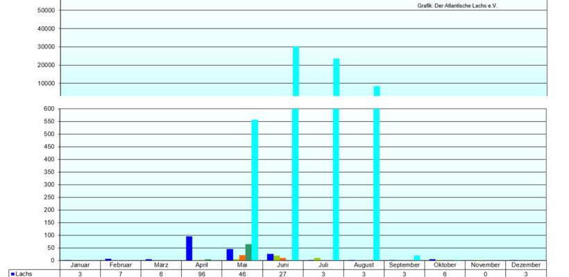 Grafik Fischzählung Iffezheim für 2020