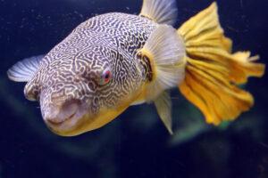 Fisch Aquazoo Düsseldorf